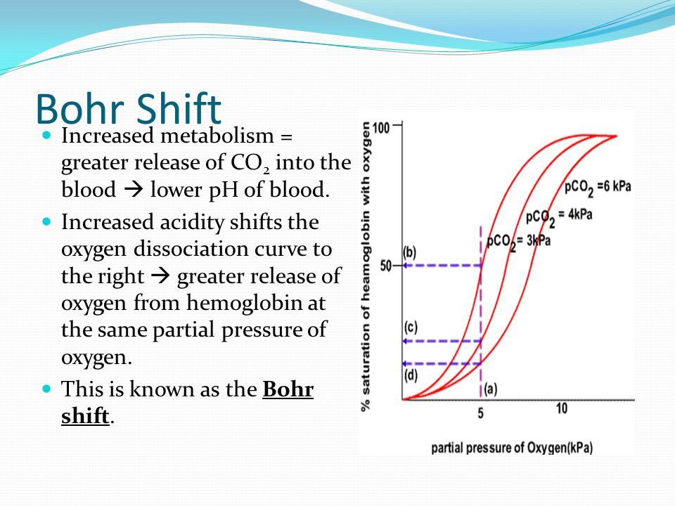 Bohr Shift Increased metabolism = greater release of CO2 into the blood  lower pH of blood.