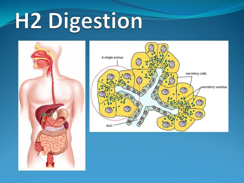 H2 Digestion