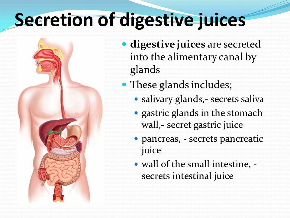 Secretion of digestive juices
