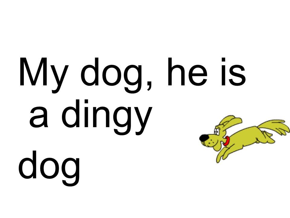 My dog, he is a dingy dog