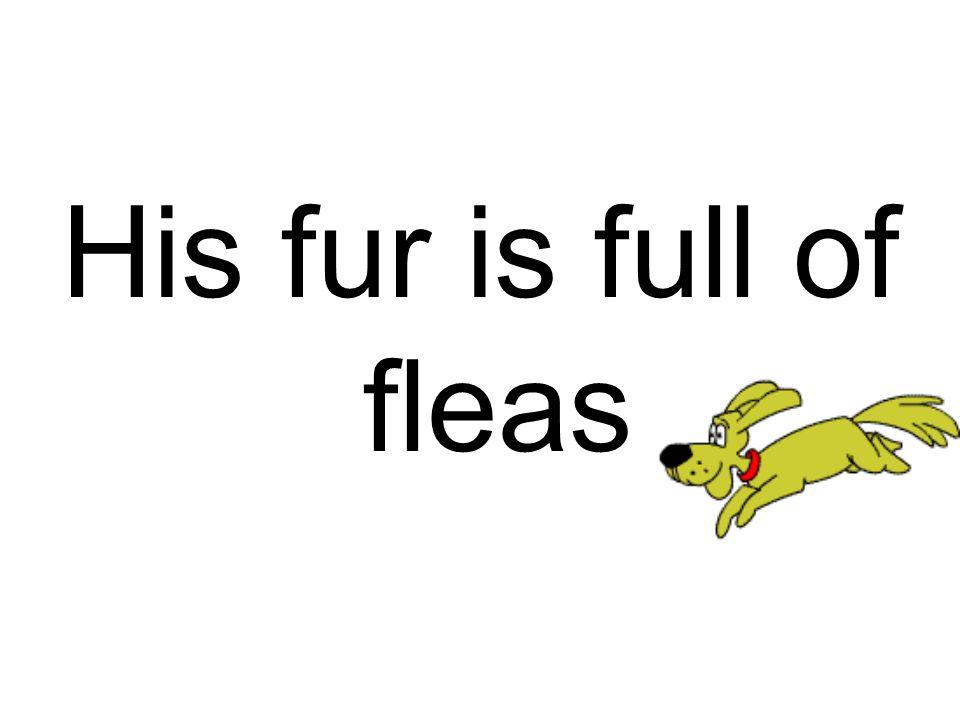 His fur is full of fleas