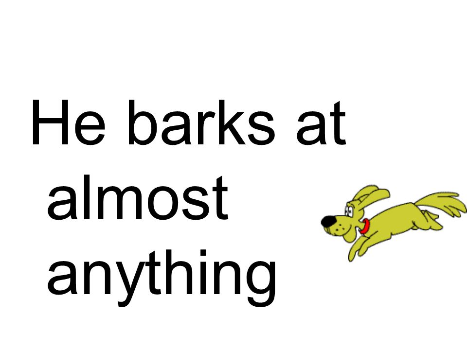 He barks at almost anything