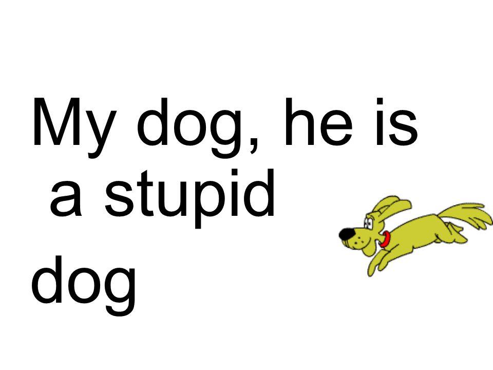 My dog, he is a stupid dog