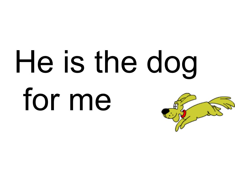 He is the dog for me