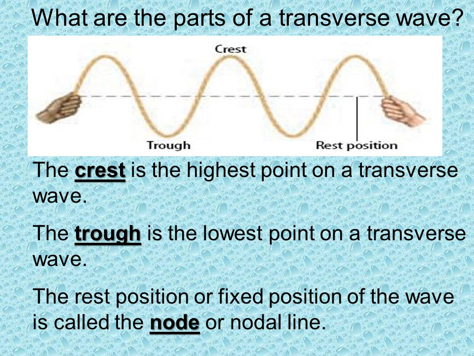 What are the parts of a transverse wave