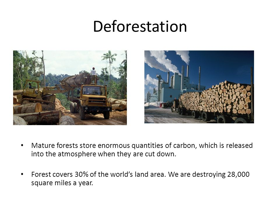 Deforestation Mature forests store enormous quantities of carbon, which is released into the atmosphere when they are cut down.