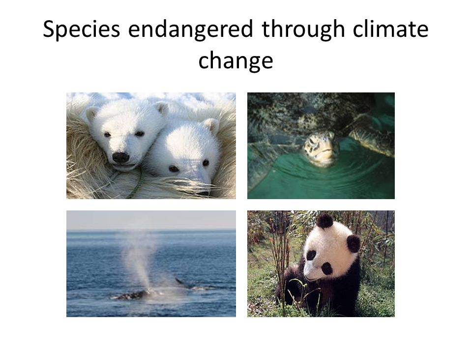 Species endangered through climate change