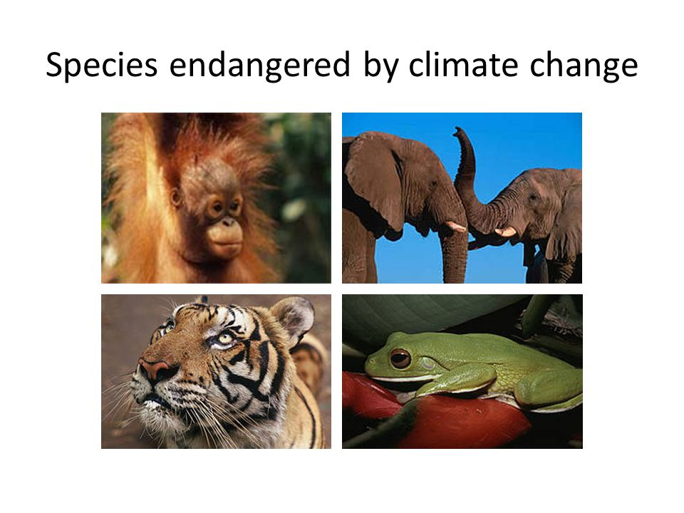 Species endangered by climate change