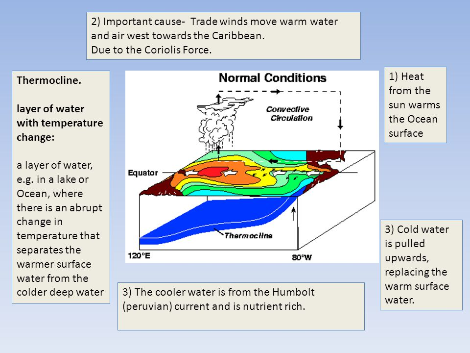 2) Important cause- Trade winds move warm water and air west towards the Caribbean.