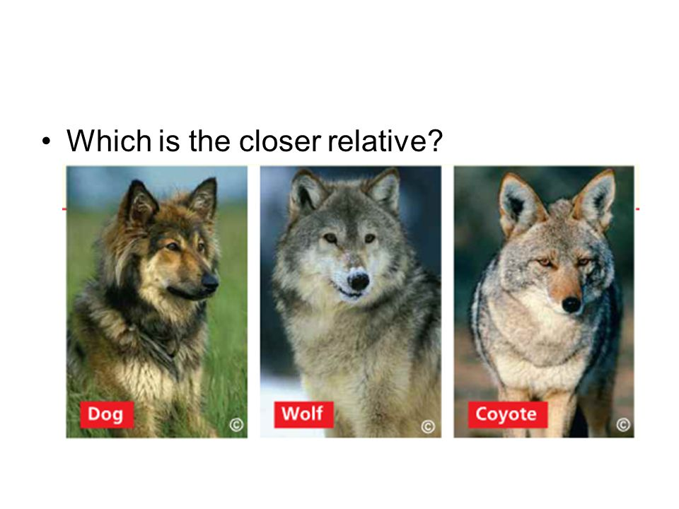 Which is the closer relative