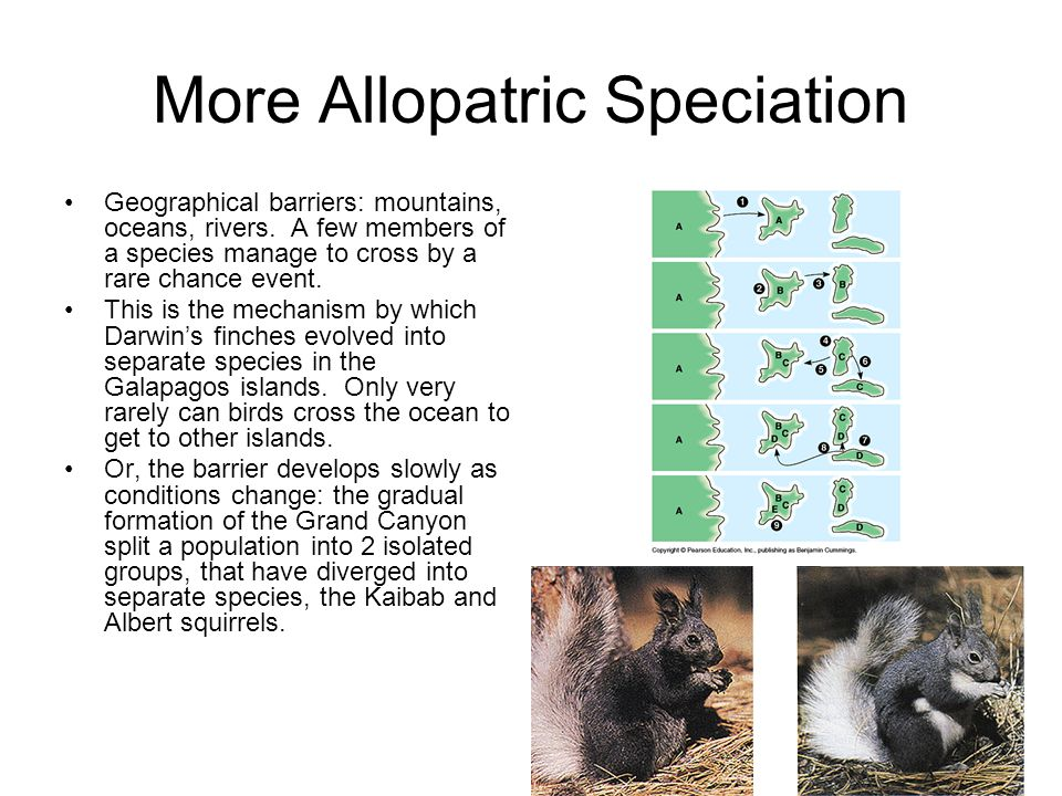 More Allopatric Speciation