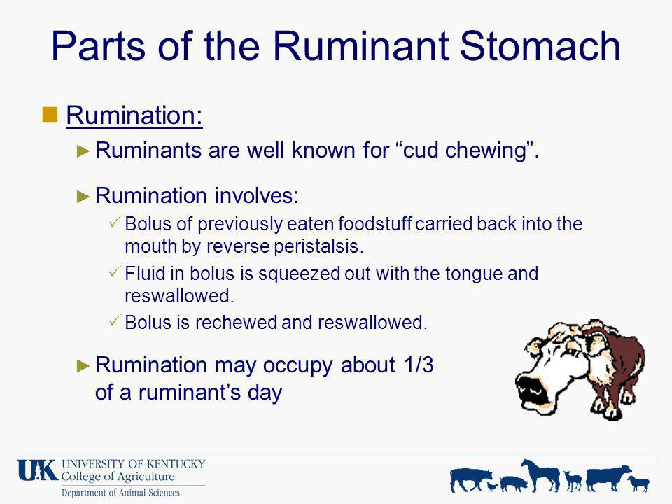 Parts of the Ruminant Stomach