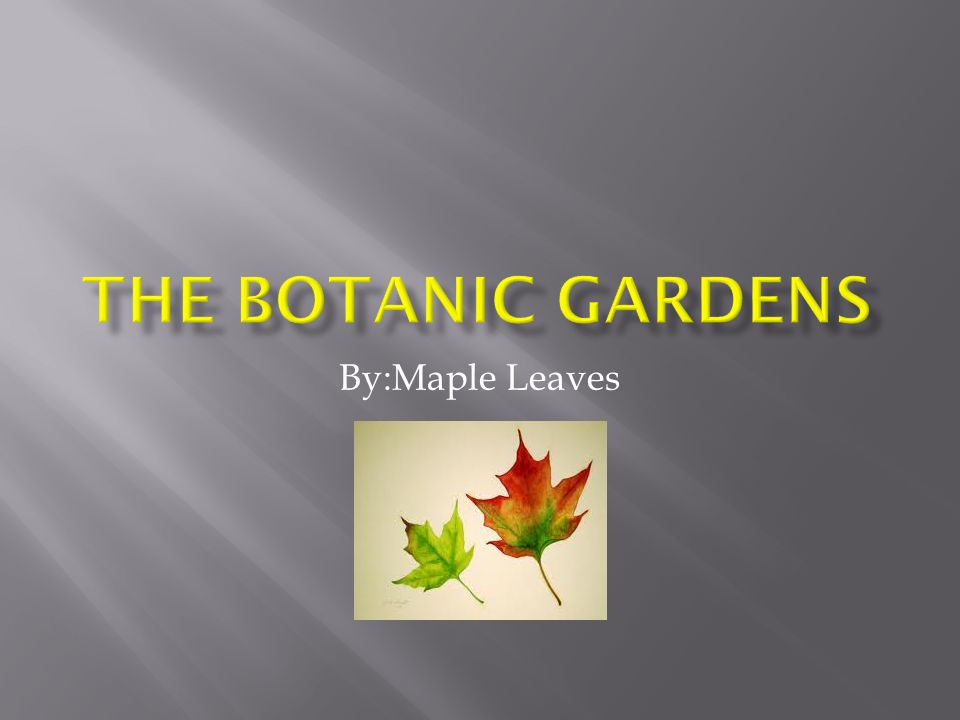 the Botanic GardenS By:Maple Leaves