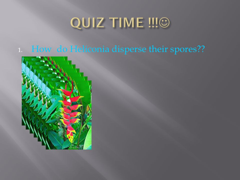QUIZ TIME !!! How do Heliconia disperse their spores