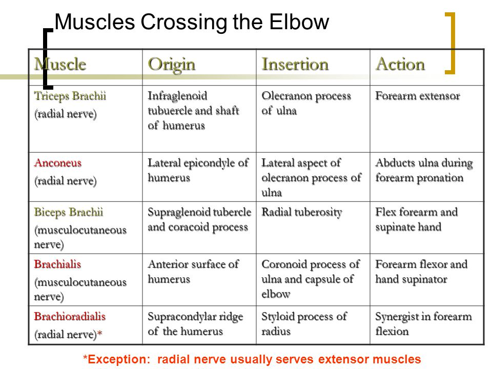 Muscles Crossing the Elbow