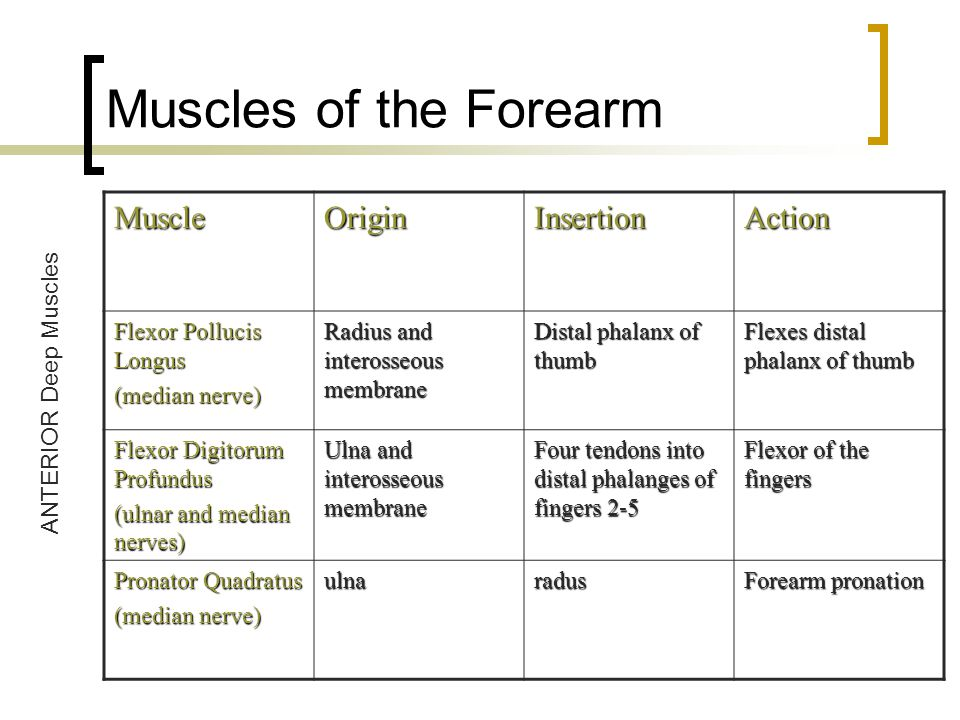Muscles of the Forearm Muscle Origin Insertion Action