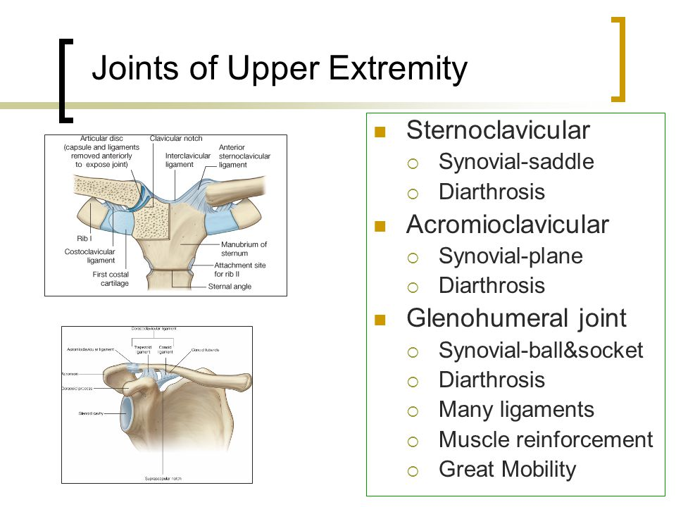 Joints of Upper Extremity