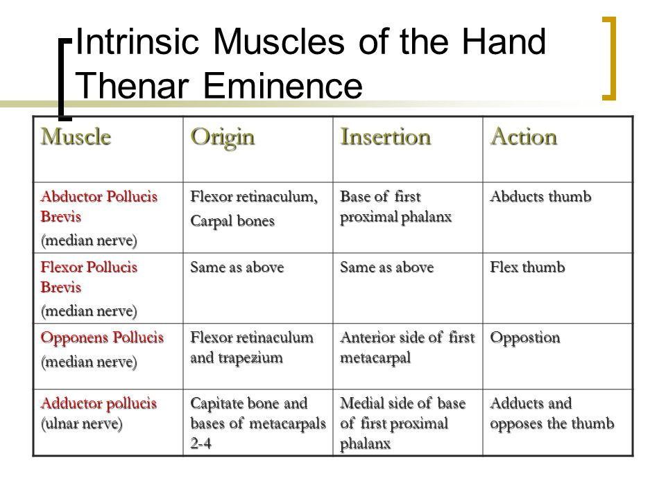 Intrinsic Muscles of the Hand Thenar Eminence