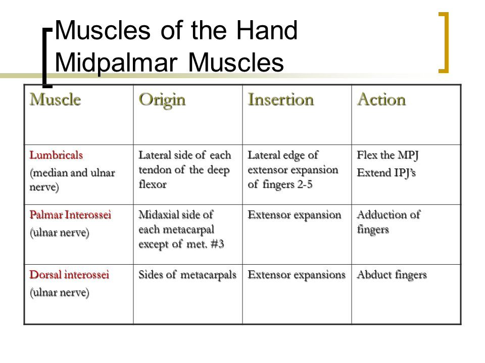 Muscles of the Hand Midpalmar Muscles