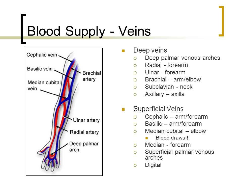 Blood Supply - Veins Deep veins Superficial Veins