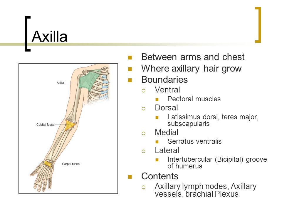 Axilla Between arms and chest Where axillary hair grow Boundaries