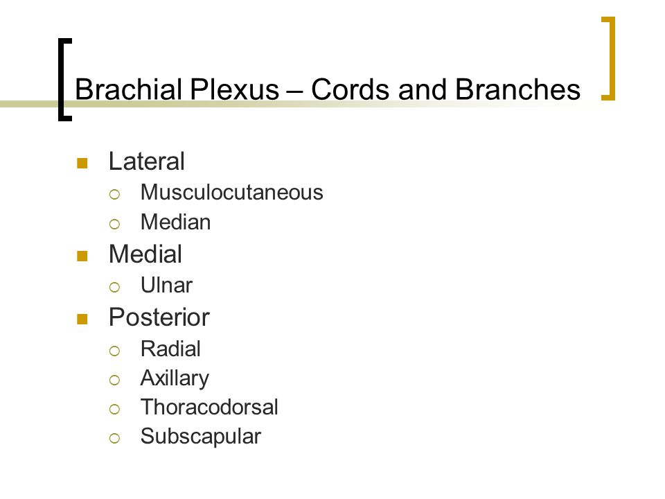 Brachial Plexus – Cords and Branches