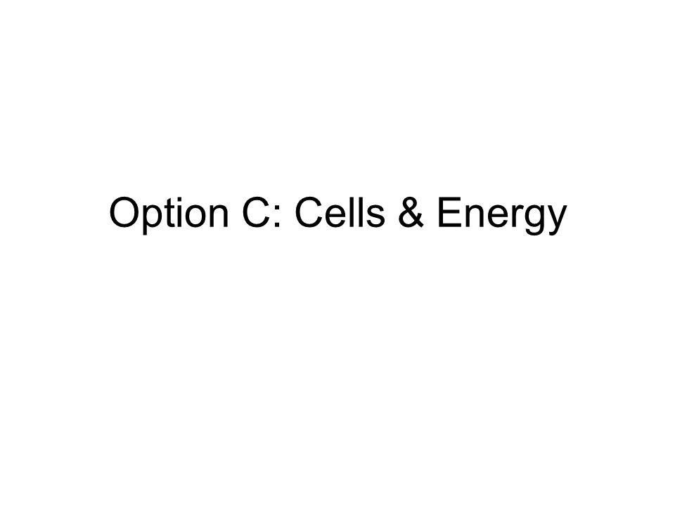 Option C: Cells & Energy