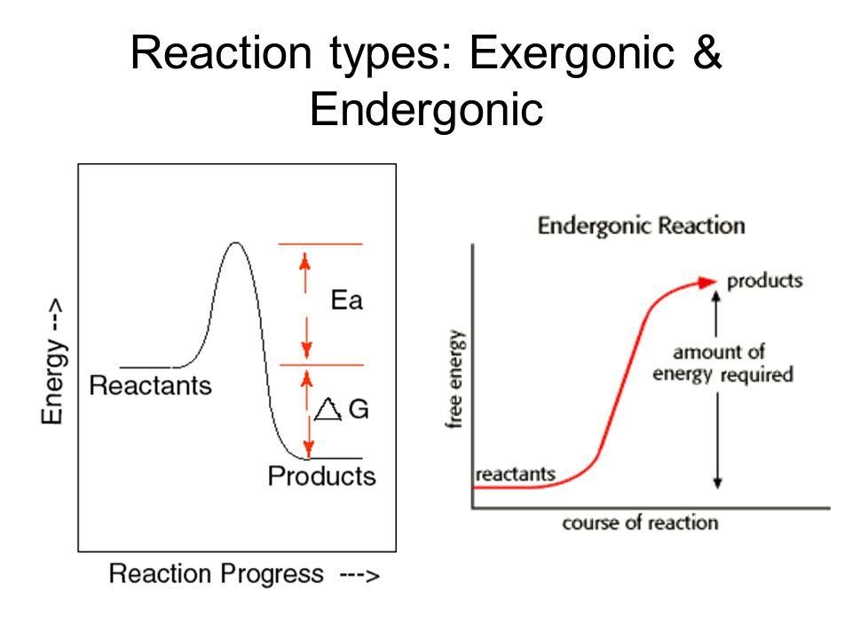 Reaction types: Exergonic & Endergonic