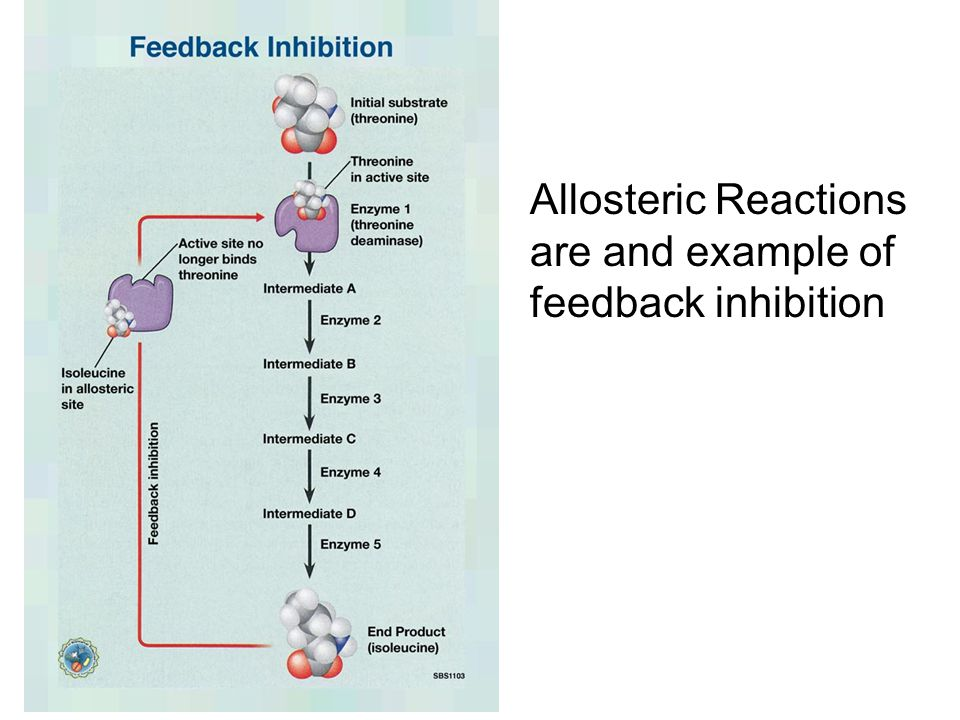 Allosteric Reactions are and example of feedback inhibition