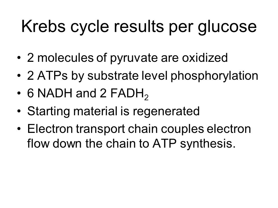 Krebs cycle results per glucose
