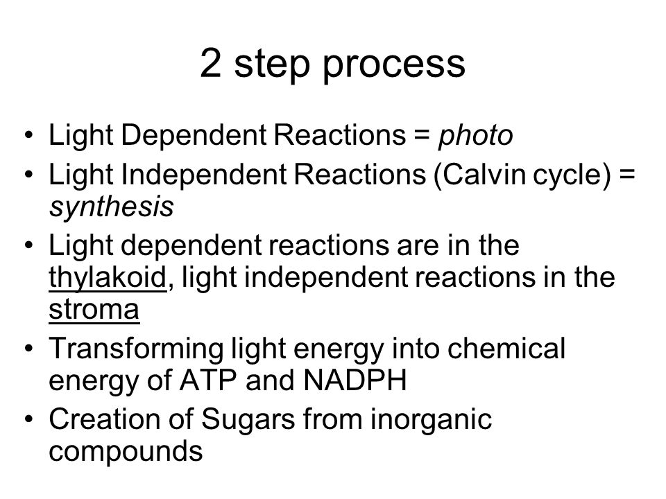 2 step process Light Dependent Reactions = photo