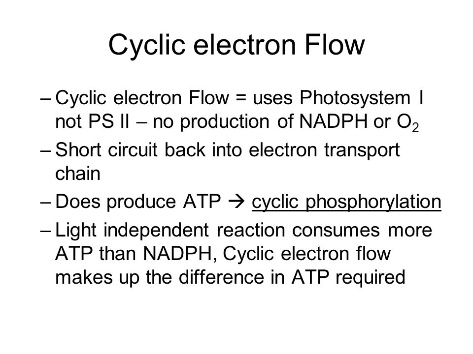 Cyclic electron Flow Cyclic electron Flow = uses Photosystem I not PS II – no production of NADPH or O2.