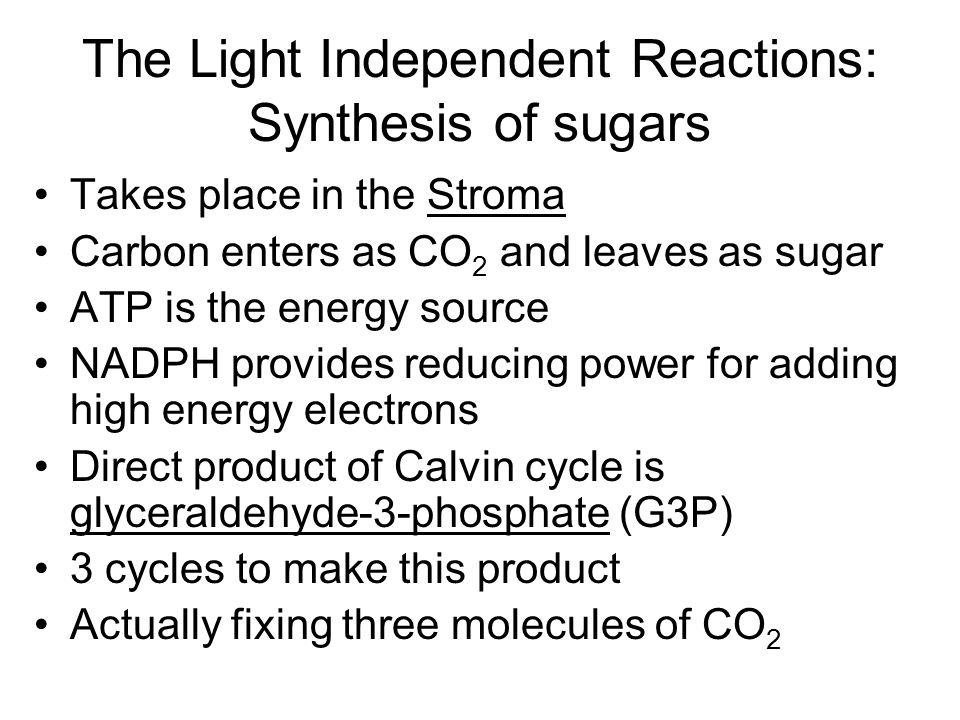 The Light Independent Reactions: Synthesis of sugars
