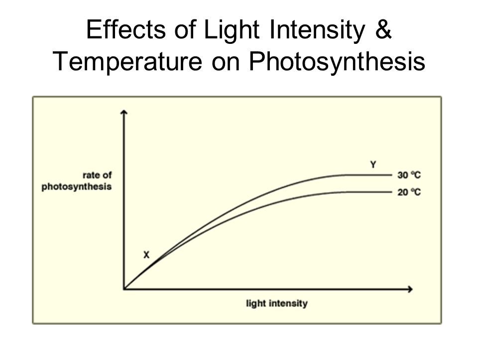 Effects of Light Intensity & Temperature on Photosynthesis