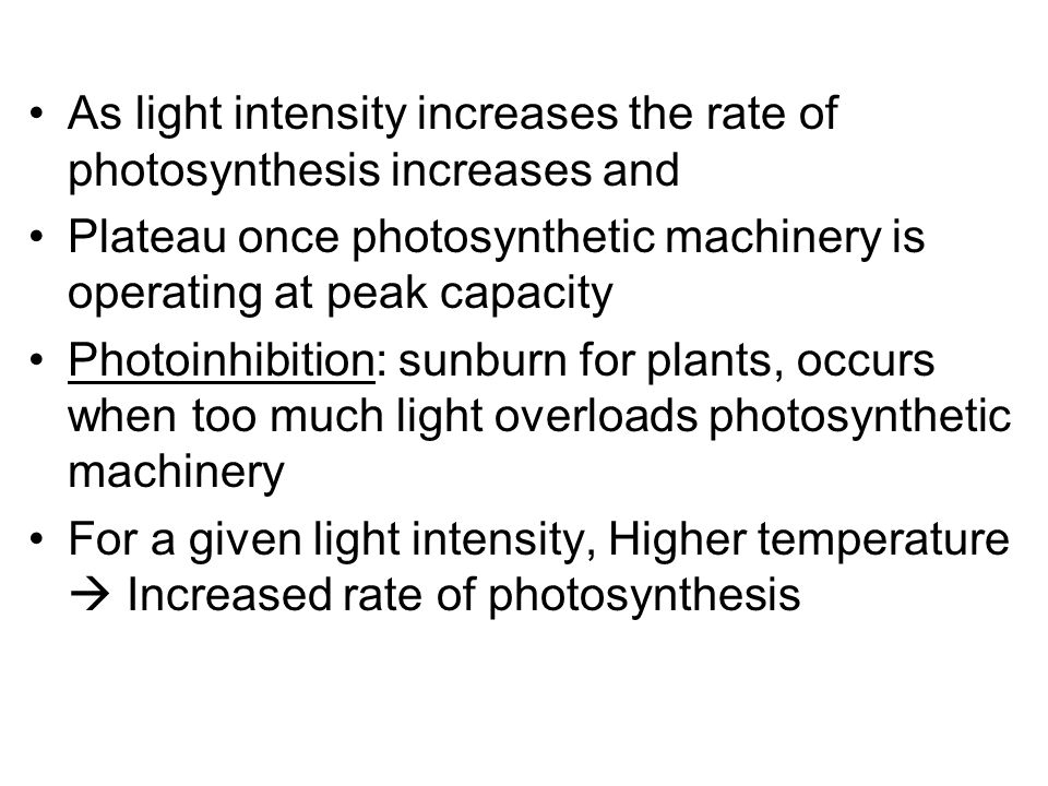 As light intensity increases the rate of photosynthesis increases and