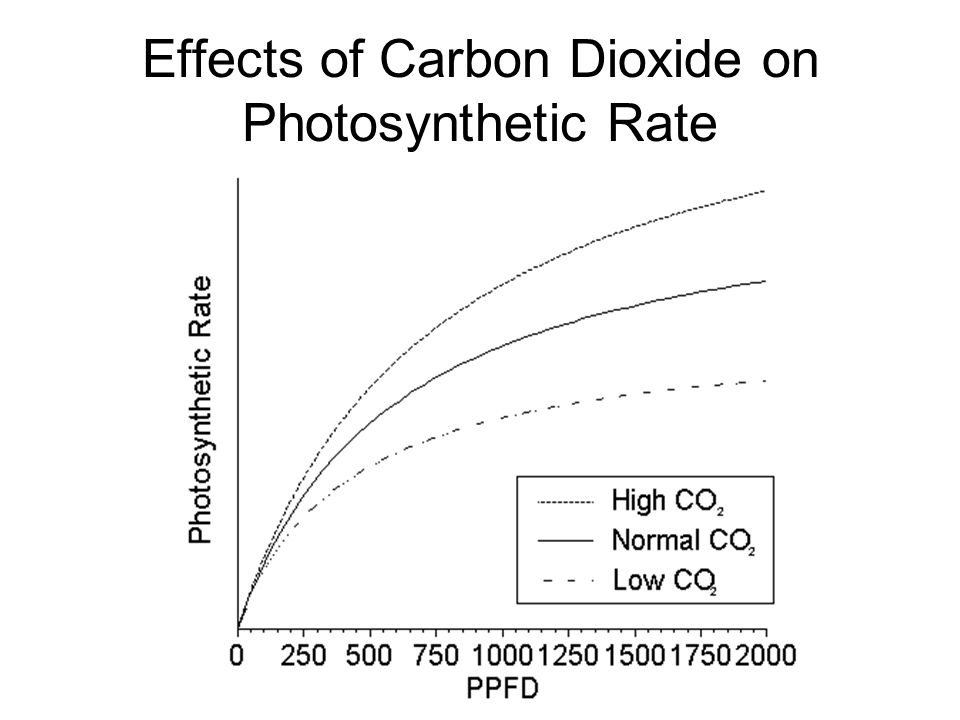 Effects of Carbon Dioxide on Photosynthetic Rate