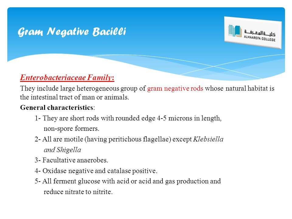 Gram Negative Bacilli Enterobacteriaceae Family: