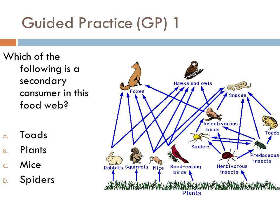 Guided Practice (GP) 1 Which of the following is a secondary consumer in this food web Toads.