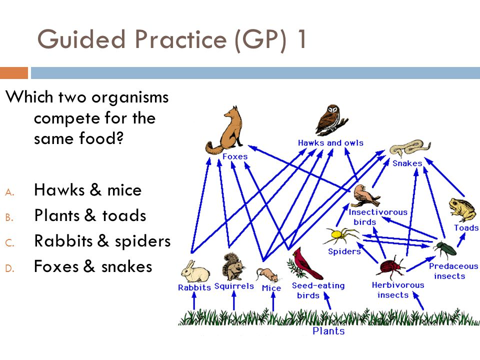 Guided Practice (GP) 1 Which two organisms compete for the same food
