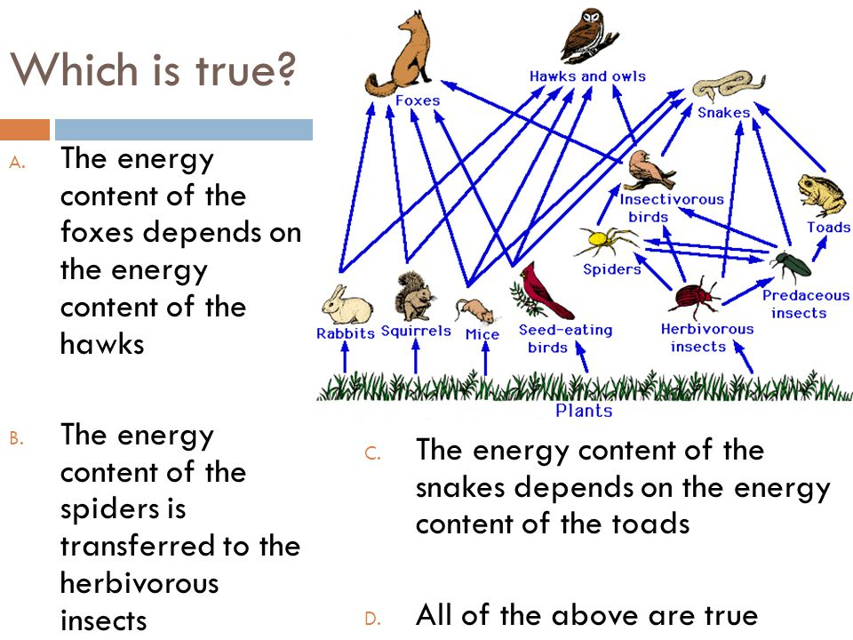 Which is true The energy content of the foxes depends on the energy content of the hawks.