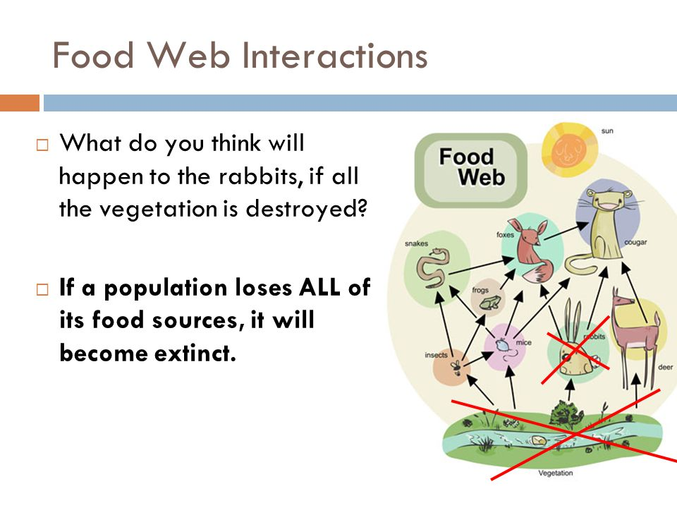 Food Web Interactions What do you think will happen to the rabbits, if all the vegetation is destroyed