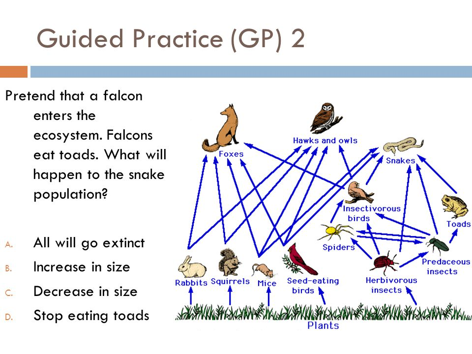 Guided Practice (GP) 2 Pretend that a falcon enters the ecosystem. Falcons eat toads. What will happen to the snake population