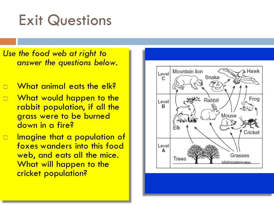 Exit Questions Use the food web at right to answer the questions below. What animal eats the elk