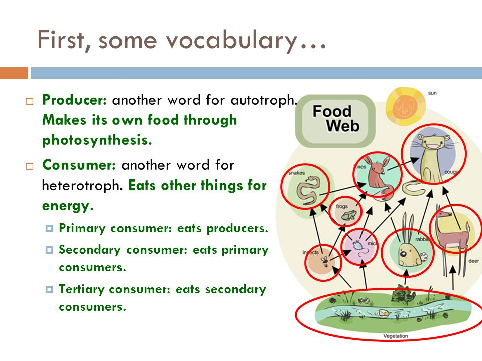 First, some vocabulary…