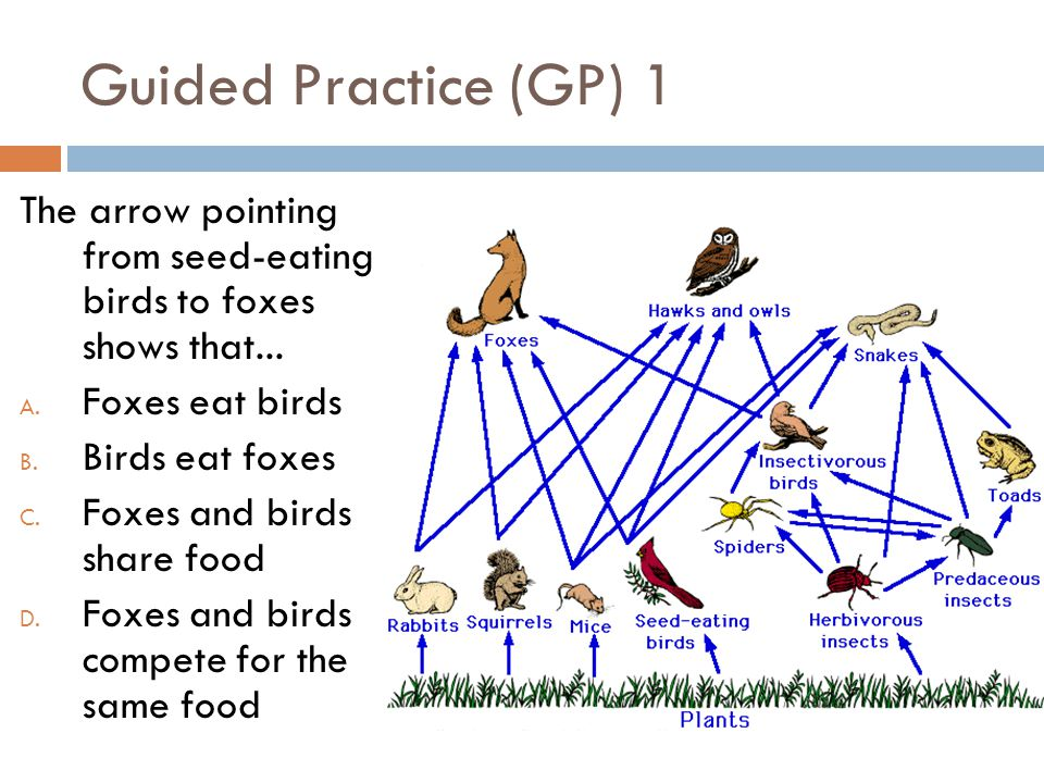 Guided Practice (GP) 1 The arrow pointing from seed-eating birds to foxes shows that... Foxes eat birds.