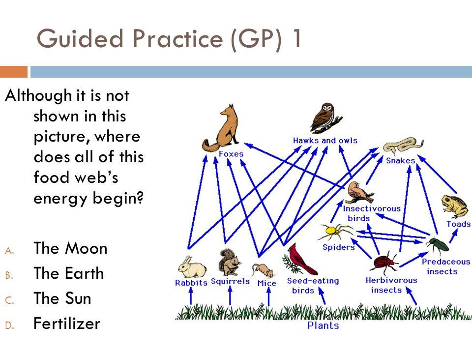 Guided Practice (GP) 1 Although it is not shown in this picture, where does all of this food web's energy begin