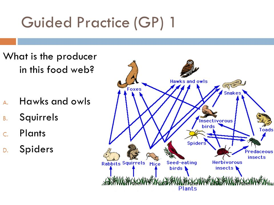 Guided Practice (GP) 1 What is the producer in this food web