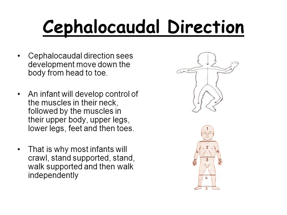 Cephalocaudal Direction