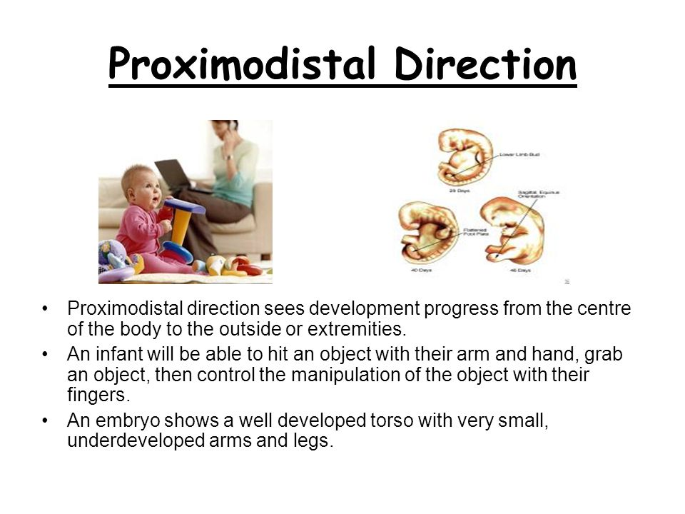 Proximodistal Direction
