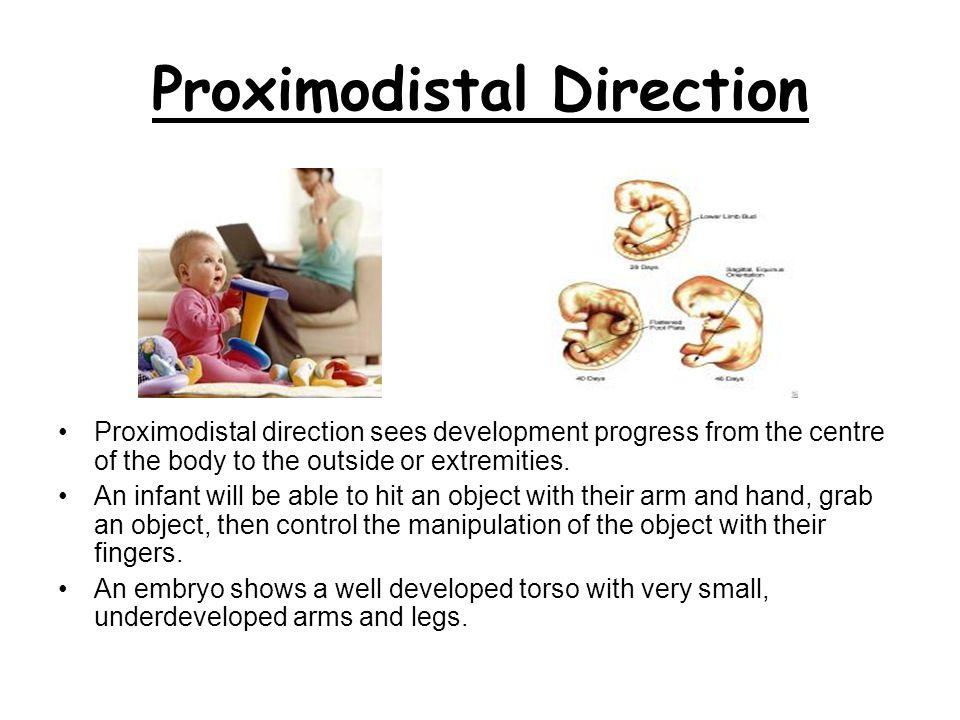 Proximodistal Direction